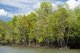 The mangrove forests of Krabi remain remarkably intact and are home to many types of fish, crabs, shrimps and molluscs. They are also important nesting grounds for hundreds of different bird species, as well as providing shelter for dugongs, monkeys, lizards and sea turtles.<br/><br/>  Mangroves are various kinds of trees up to medium height and shrubs that grow in saline coastal sediment habitats in the tropics and subtropics – mainly between latitudes 25° N and 25° S.
